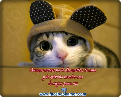 fotos muy bonitas de gatos postales de cumplea 241 os con gatos imagui