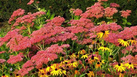 garten pflanzen die wenig wasser brauchen was bl 252 ht im herbst gartennatur