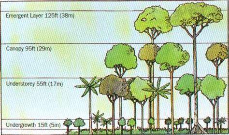 rainforest diagram science toucan