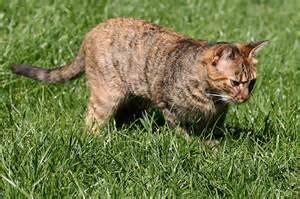 mittel gegen katzen im garten katzen vom garten fernhalten information mittel und