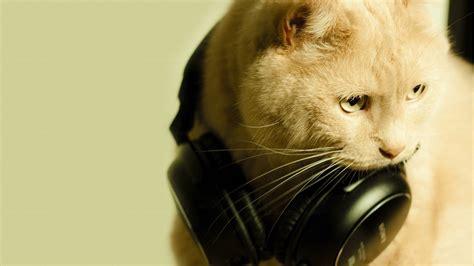 with headphones cat with headphones hd wallpaper 187 fullhdwpp hd wallpapers 1920x1080