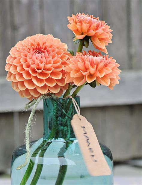 growing with plants six great cut flower dahlias to grow