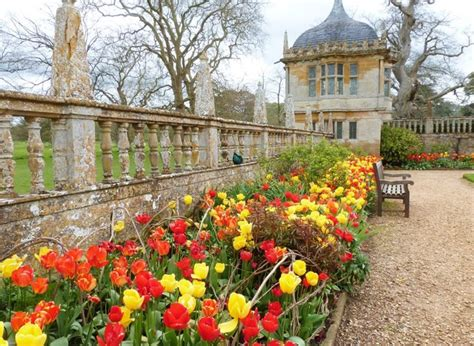 a chef in the garden montacute house fine display of tulips in the formal 169 derek voller