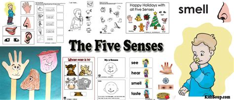 patterns in nature lesson plans kindergarten my five senses preschool activities lessons and