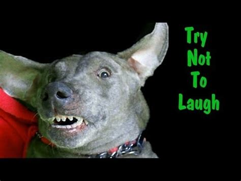 try not to laugh dogs try not to laugh at my s dreams