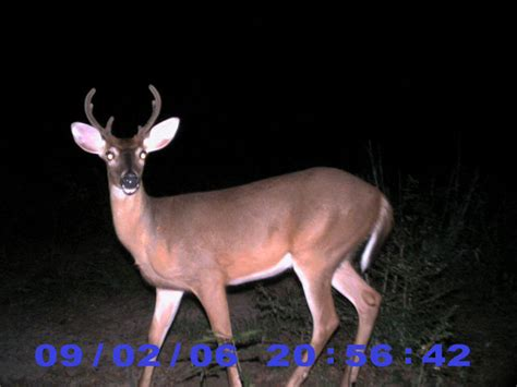 Iowa Records Iowa Record Whitetail Bucks