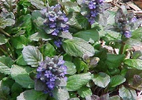 fiori da piantare in autunno fiori da piantare in autunno pollicegreen