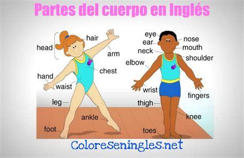 imagenes en ingles de las partes del cuerpo partes del cuerpo en ingl 233 s colores en ingles