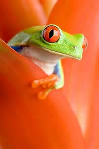 frog colors tree frog color