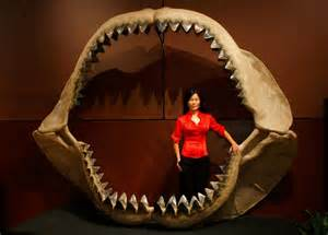 Shark week megalodon films discovery channel lies about extinct