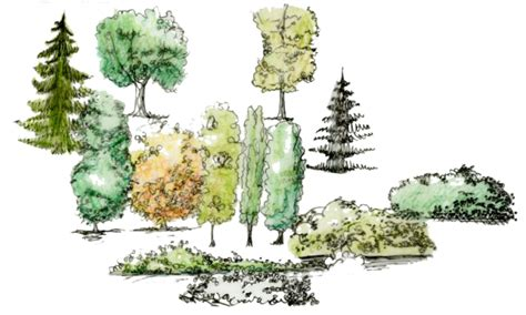 Landscape Architecture Trees Trees Isabell Holmstedt