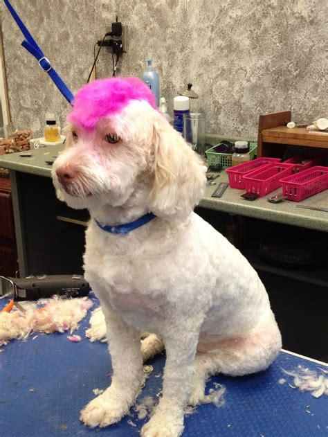 pet haircuts near me dog grooming pink mohawk dog grooming pinterest dog