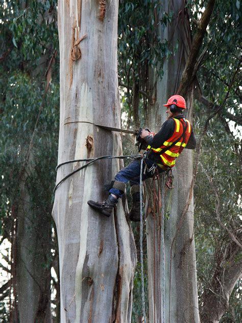 arboriculture wikipedia