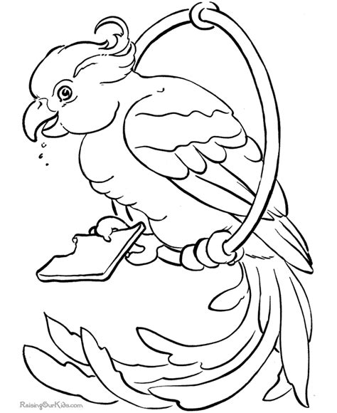 tropical bird coloring page tropical birds coloring pages coloring home