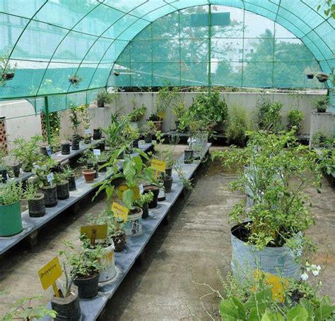 cocos roof garden chennai 187 green initiatives environment