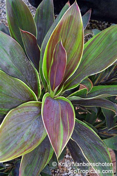 pin  tropical plants