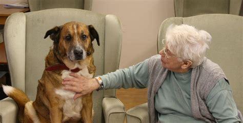 perros con personas los perros pueden servir de alerta de las personas mayores