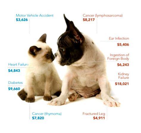 pet insurance doglore net