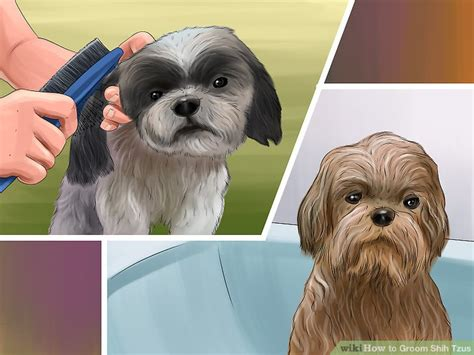 best way to groom a shih tzu step by step pictures of grooming a shih poo tzu how to groom shih tzus 14 steps with