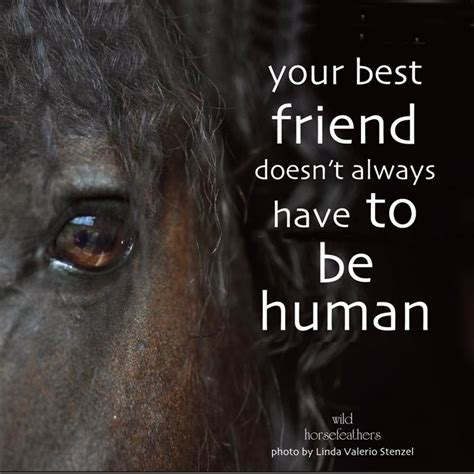 quotes about horses quot your best friend doesn t always to be human
