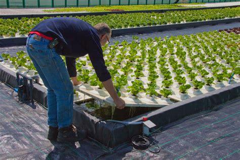 Colture Idroponiche In Casa coltura idroponica istruzioni all uso idee green