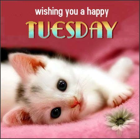 wishing   happy tuesday pictures   images