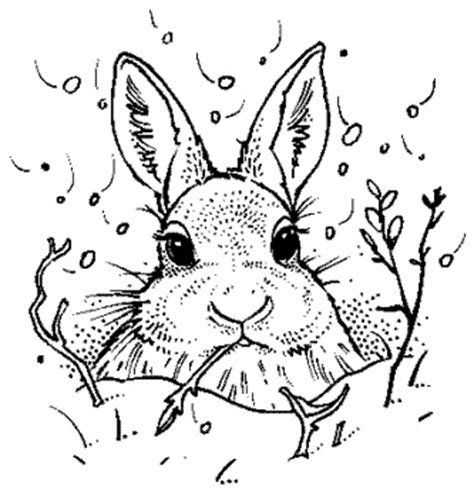 snow bunny coloring pages 17 best images about arts crafts designs patterns on