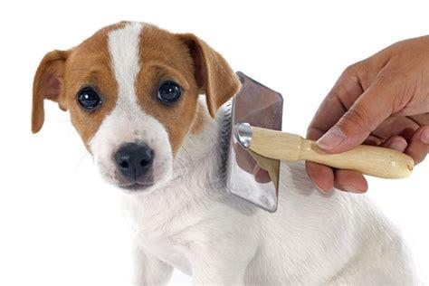 slicker brush for dogs best slicker brush for dogs for all sizes coats breeds