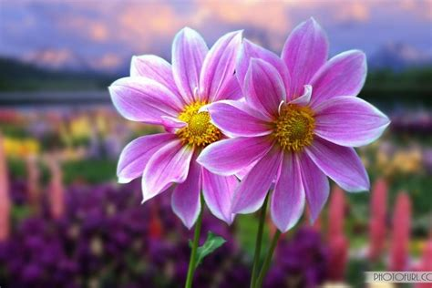cool flowers wallpaper nice wallpapers most beautiful flowers free nature screensavers and wallpaper