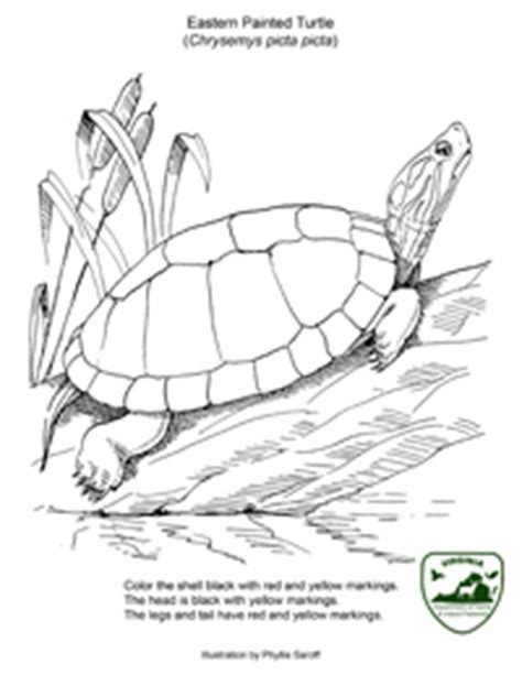 coloring page painted turtle kids page