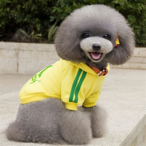 Jaket Hoodie Putih Acuk Indonesia adidog baju jaket hoodie anjing size m yellow jakartanotebook