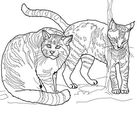 jaguarundi coloring page ausmalbild ein p 228 rchen europ 228 ischer wildkatzen