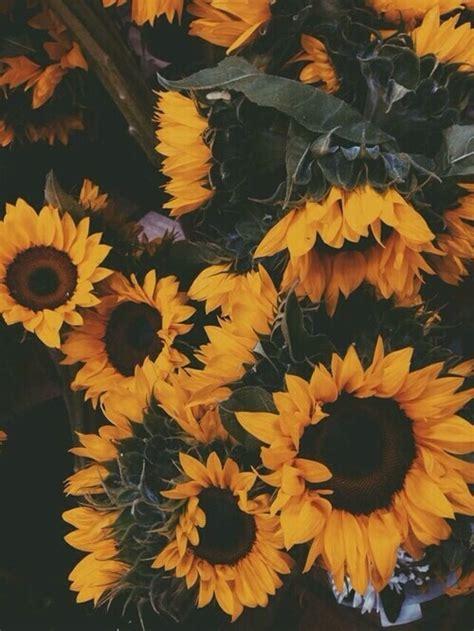 tumblr imagenes bonitas flores image 4033343 by owlpurist on favim com