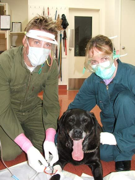 chemotherapy for dogs chemotherapy pets te ara encyclopedia of new zealand