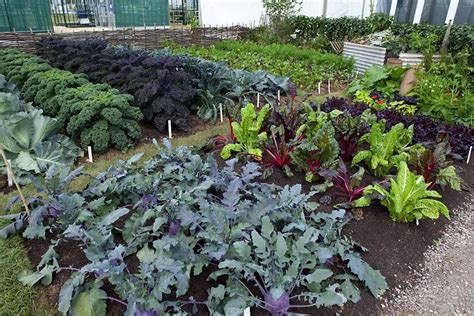What Kind Of Allotment The Vegetable Only Plot Rhs Allotment Vegetable Gardening