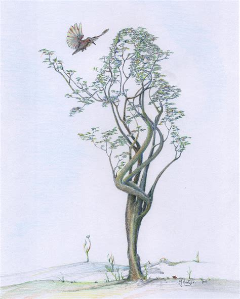 drawings of tree tree dancer in flight coloured by johnson