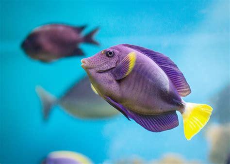 walaupun ikan hias air laut berpotensi mensejahterakan