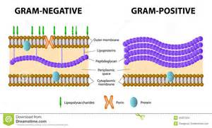 gram positive is what color lab midterm microbiology 2210 with at casper