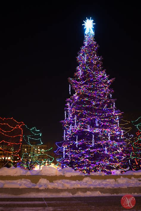 28 best christmas tree lots edmonton festive edmonton
