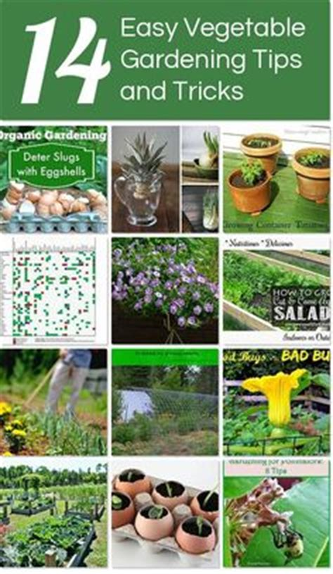vegetable gardening tips and tricks no dig gardens how to grow vegetables by gardening
