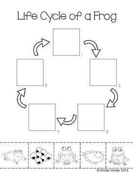 Cycle Of A Frog Worksheet by Frog Cycle Cut And Paste Worksheet By Lemons And