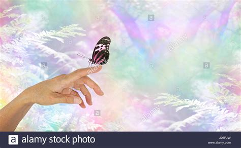 Butterfly Touch L by Touch Tenderness Stock Photos Touch Tenderness Stock