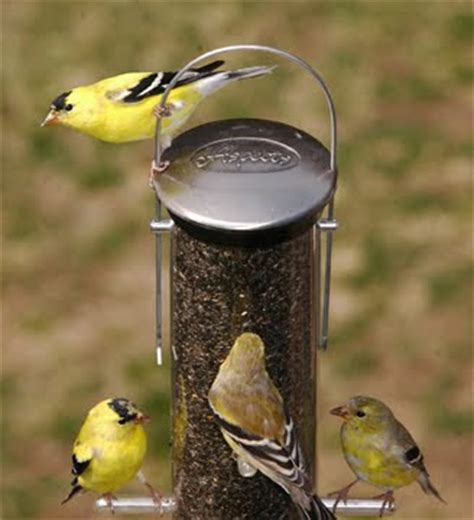 wild birds unlimited what seed is best for attracting the