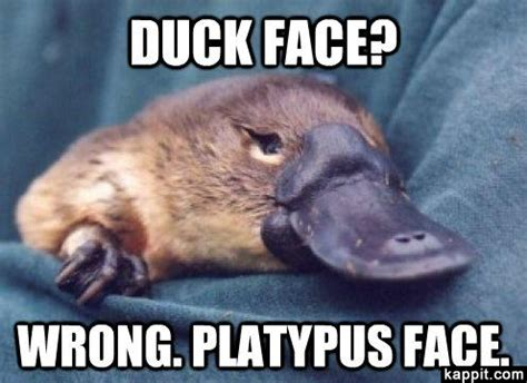 Platypus Meme - duck face wrong platypus face