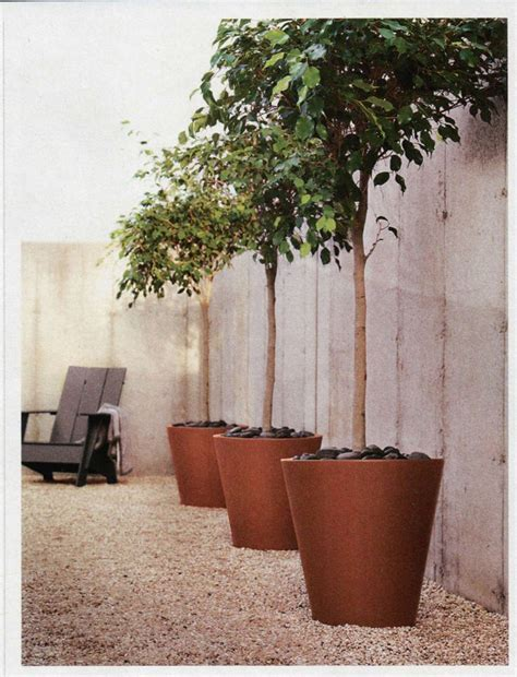 62 Best Tree Pot Images On Pinterest Herb Garden Planter Potted Trees For Patio