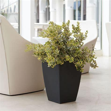 vasi arredamento interni vasi per arredamento interno vasi d arredamento with vasi