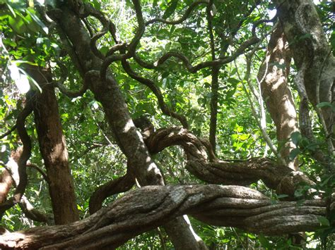 Search On Vine Jungles Vines And Search On