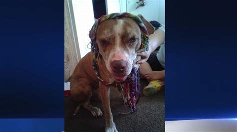 delta dogs family searches for lost on delta flight from lax nbc southern california