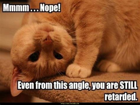 Youre Retarded Meme - funny image gallery images for funny cats wallpapers