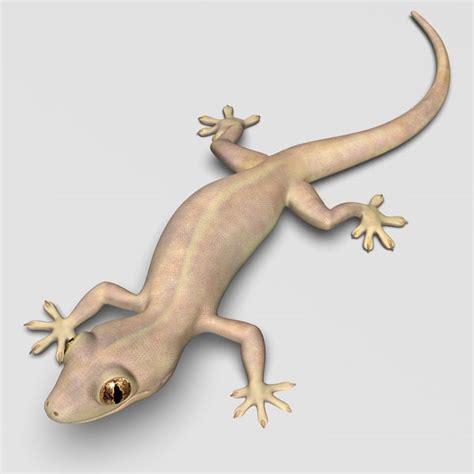 house lizard 3d house lizard model